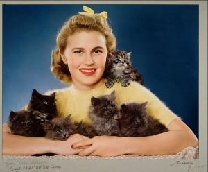appropriate kittens