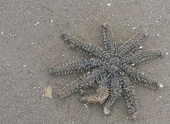 sea star 2.jpg